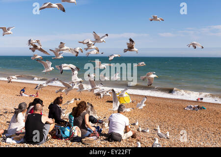 Hastings, UK. 19th July 2015. A flock of seagulls are eager to have their share of food from a family who enjoy - Stock Photo