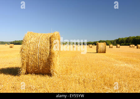 Rolls of straw in a field harvested in summer - France - Stock Photo