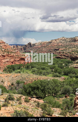Swath of green trees runs through a canyon in The Grand Staircase-Escalante National Monument, Utah - Stock Photo