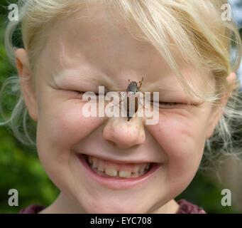 Maikaefer; Melolontha; krabbelnd, Nase - Stock Photo