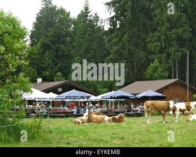Deutschland, Oberbayern, Königsdorfer Alm bei Geretsried, - Stock Photo