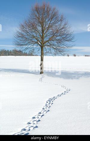 Winterlandschaft, Taunus, - Stock Photo