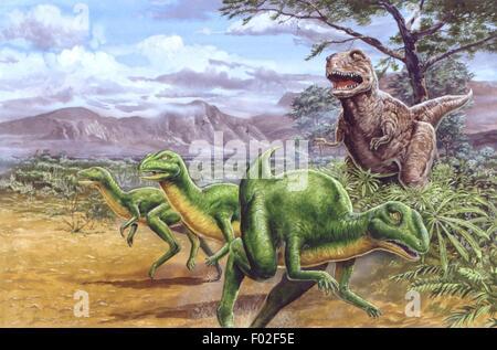 Palaeozoology - Cretaceous period - Dinosaurs - Parksosaurus taking flight from an Albertosaurus - Art work by Tim - Stock Photo