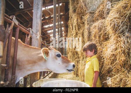 Boy on farm with a cow - Stock Photo