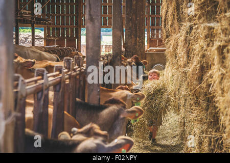 Boy with Cows in stalls on farm - Stock Photo