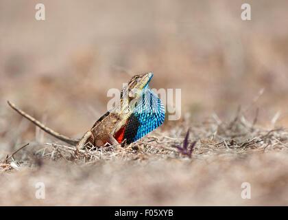 The image was shot near satara-Maharashtra-India - Stock Photo