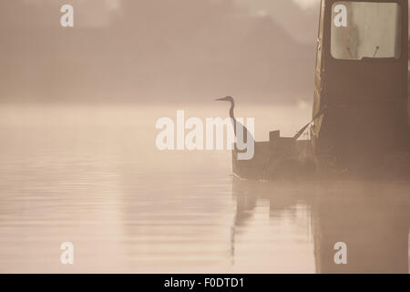 A grey heron sits upon a barge in the mist - Stock Photo