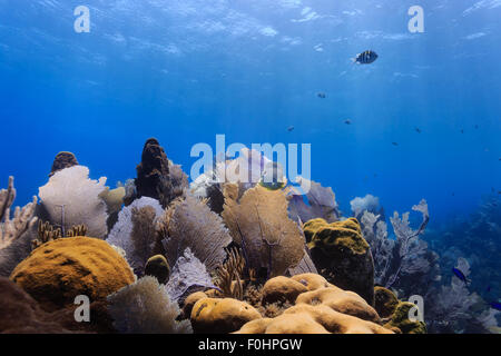Landscape of colorful bright sea fans and fish on tropical coral reef - Stock Photo