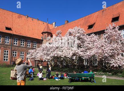 Blooming  Magnolia tree at town hall garden, Lueneburg, Lüneburg, Lower Saxony, Germany, Europe - Stock Photo