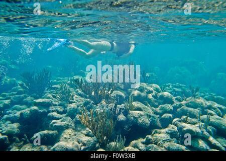 Snorkeler swimming underwater over coral - Stock Photo