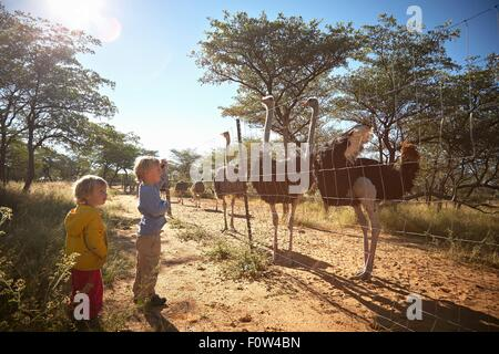 Boys looking at herd of ostriches, Harnas Wildlife Foundation, Namibia - Stock Photo