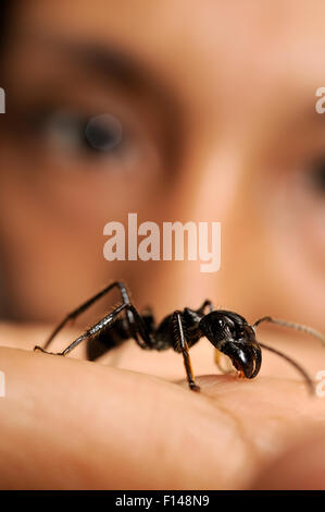 Biologist with Isula / Bullet ant (Paraponera clavata) on hand, Peru. Model released. - Stock Photo