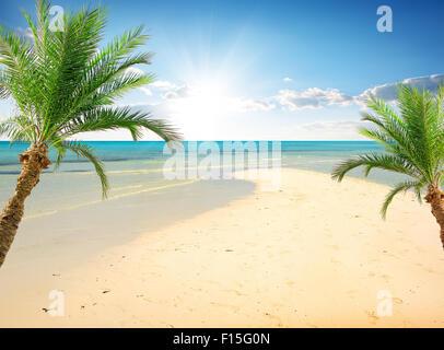 Palms on the beach near sea in sunny day - Stock Photo