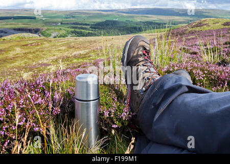 Holwick, Teesdale, County Durham. 30th August 2015. UK Weather.  A walker relaxes in the sunshine among flowering - Stock Photo