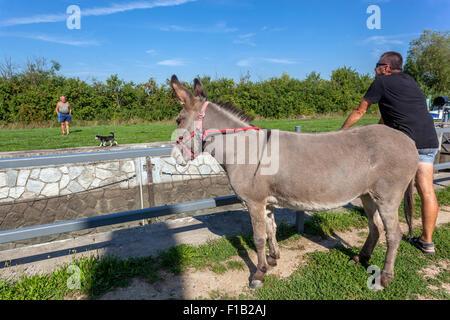 Female donkey Violka, Bata Canal, port Straznice Petrov, South Moravia, Czech Republic, Europe Bata Canal is a navigable - Stock Photo