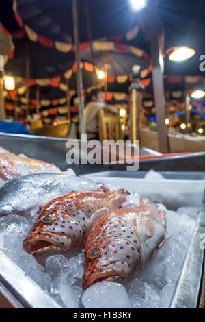 Red snapper on ice, fish on display at a restaurant, Naiharn Beach Phuket, Thailand - Stock Photo