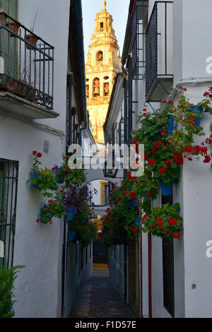 Calleja de las Flores with Cathedral Tower in background, Cordoba, Andalusia, Spain - Stock Photo