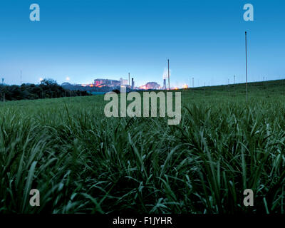 Young irrigated cane and Mill, Tsb Sugar - Stock Photo