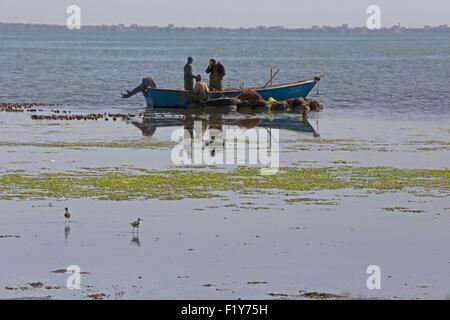 Morocco, Nador Lagoon, Black-winged Stilt (Himantopus himantopus), fishermen - Stock Photo