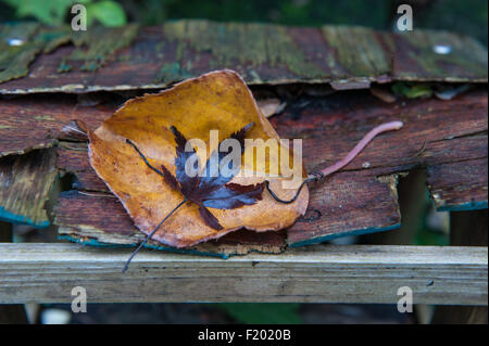 Autumn leaves on rotting wood, underlined by a single solid wooden cross-piece - Stock Photo