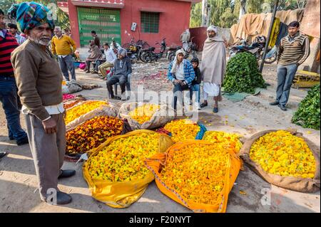 India, Rajasthan state, Jaipur, Chandi Ki Taksal flower market - Stock Photo