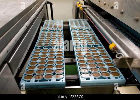 United Kingdom, Bournville : A picture shows the production line for Cadbury Creme Eggs in Bournville. - Stock Photo