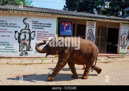 Sri Lanka, Ceylon, North Central Province, Pinnawela elephant orphanage - Stock Photo