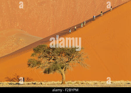 Tourists climbing Dune 45 in the Namib Desert, most likely the world's most photographed and climbed dune, camel - Stock Photo