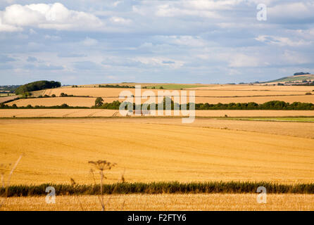 Summer chalk landscape of golden rolling arable fields view north west from near Aldbourne, Wiltshire, England, - Stock Photo