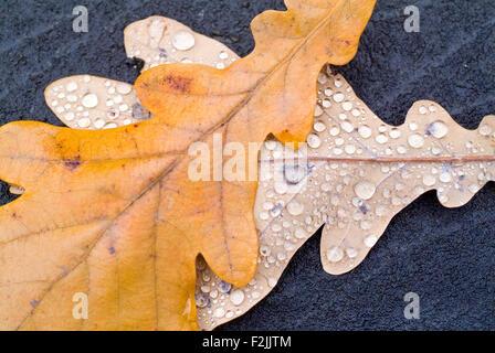 Autumn Leaf on a gravestone cemetary bonn germany europe - Stock Photo