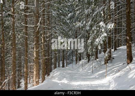 Österreich, Niederösterreich, Lackenhof am Ötscher, Waldweg im Winter - Stock Photo