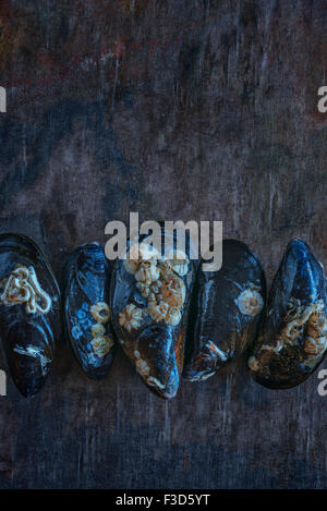Fresh live mussels - Stock Photo