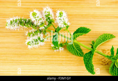 Macro closeup of fresh home-grown mint and mint flower - Stock Photo