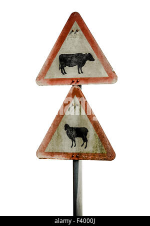 Grungy UK Cattle Warning Sign - Stock Photo