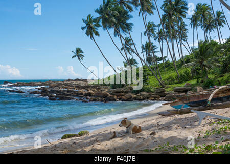 Dog resting on beach - Stock Photo