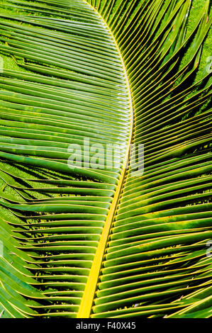 Graphic abstract view of Palm fronds, Kaua'i Marriott Resort; Kalapaki Bay, Kaua'i, Hawaii, USA - Stock Photo