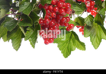 Red currant isolated on white background - Stock Photo