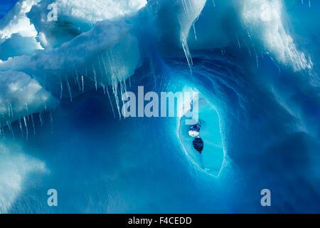 Antarctica, Icicles hang from iceberg near Enterprise Island in Wilhelmina Bay along Antarctic Peninsula. - Stock Photo