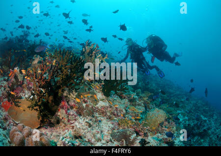 Young couple diver swims over a coral reef, and is looking at a flock of brightly colored fish, Indian Ocean, Maldives - Stock Photo