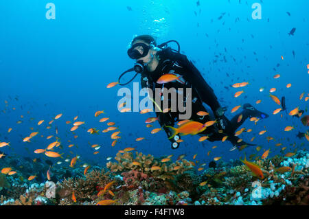 Sept. 27, 2015 - Indian Ocean, Maldives - Young woman diver swimming over the coral reef and looking at a flock - Stock Photo