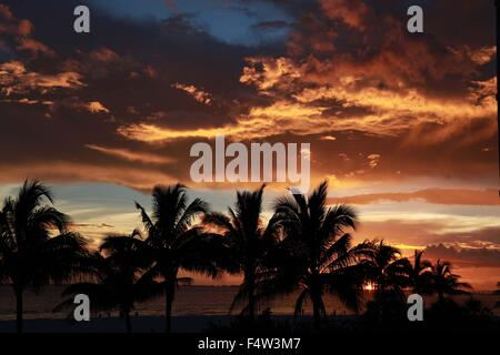 Sanibel, Florida, USA. 9th Aug, 2013. Palm trees in silhouette at sunset. Situated along the Gulf of Mexico, just - Stock Photo