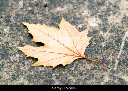 Autumn Leaf on a gravestone cemetery bonn germany europe - Stock Photo