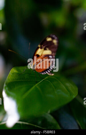 Key West Butterfly & Nature Conservatory / Key West, Florida, USA - Stock Photo