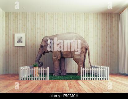 An Elephant calf as the pet. Photo combination concept - Stock Photo