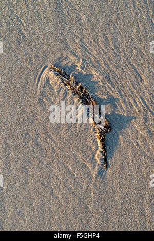 Seaweed pattern on sand with shadows and early morning light. UK - Stock Photo