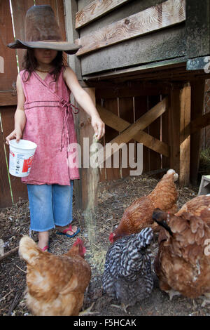 young girl with big old hat covering her eyes feeds chickens out of a plastic container in enclosure - Stock Photo