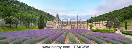 Lavender fields in full bloom in early July in front of Abbaye de Sénanque Abbey at sunrise, Vaucluse, Provence, - Stock Photo