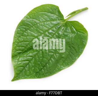 wild betel, la lot, piper lolot, lolot pepper, piper sarmentosum, leafbush - Stock Photo