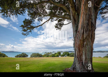 New Zealand. Waitangi Treaty Grounds and The Bay of Islands. Cruise ship luxury cruise liner in the bay. - Stock Photo