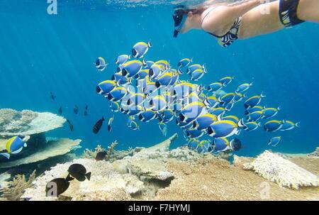 Girl snorkeling with fish, Maldives - Stock Photo